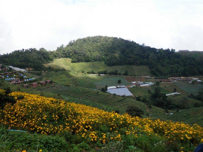 098 Royal Project auf dem Doi Mon Cham bei Mae Rim 8