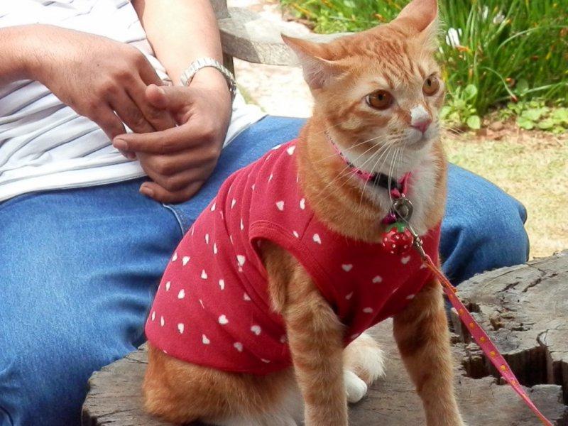 105 auch der Katze aus Bangkok ist hier oben kalt