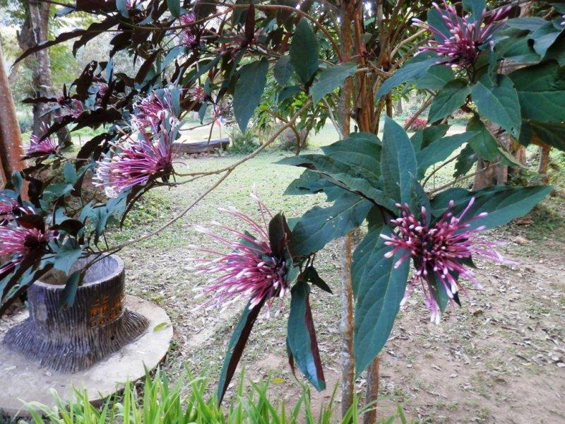 109 Pang Ung Garden 4